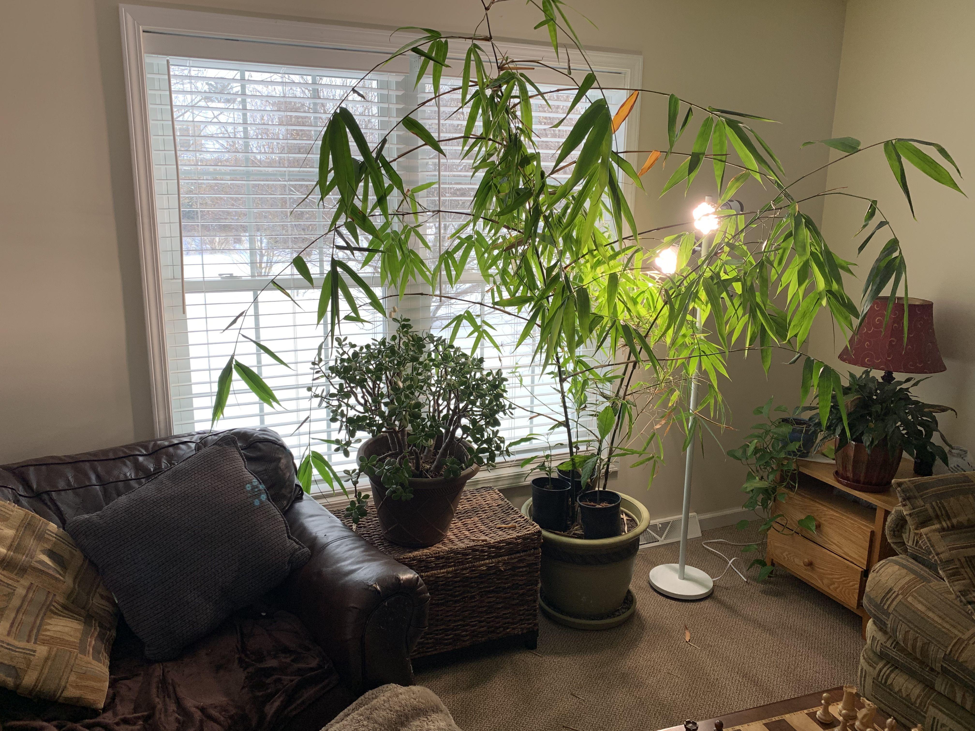 Sansi Led Security Lights Led Bulbs Grow Lights Grow