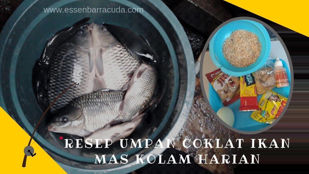 Umpan Coklat Ikan Mas Kolam Harian Ikan Mas Kolam Ikan