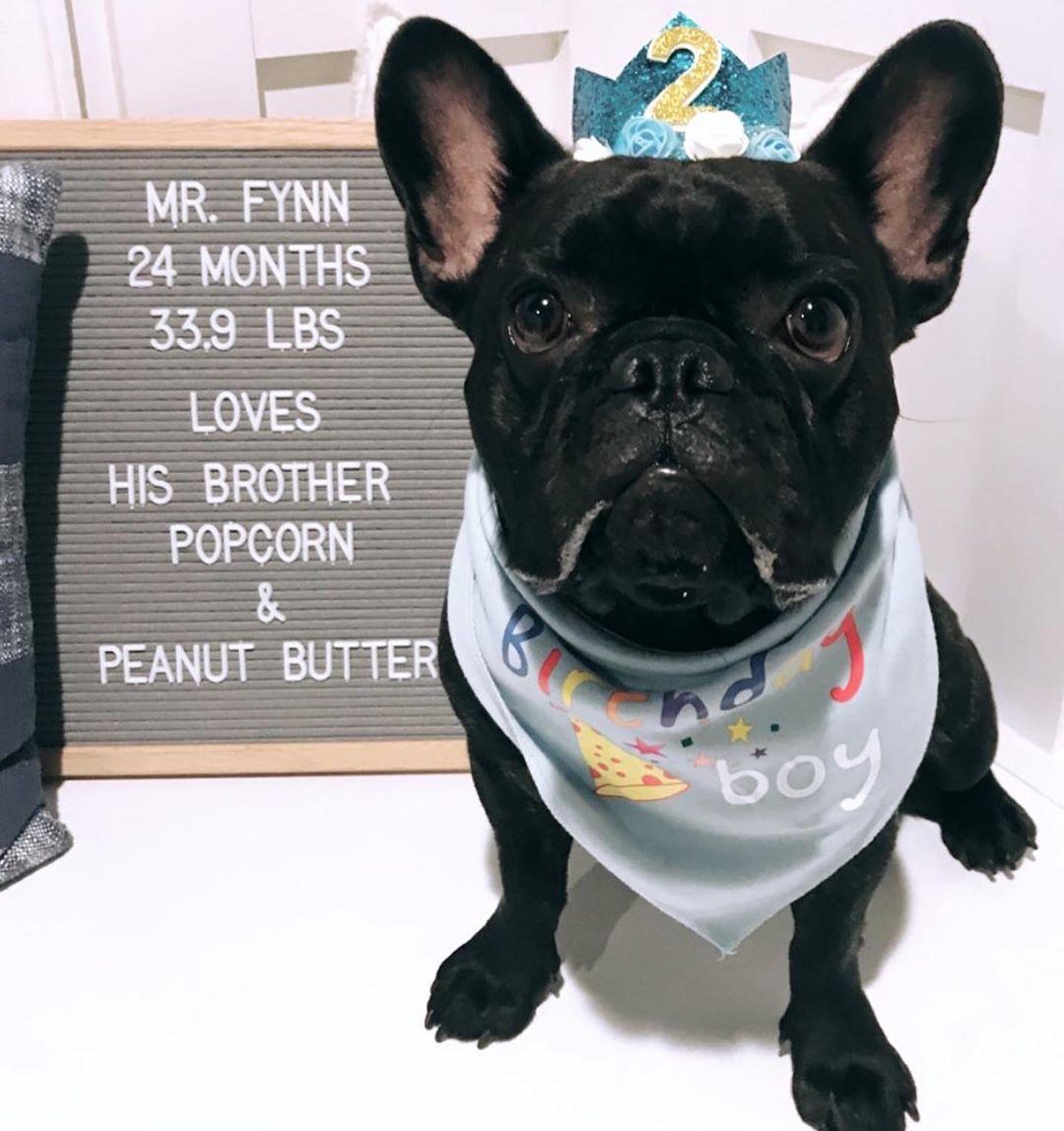 Grain Free Pb J Cookie Recipe Our Fave Dog Treats Make Dog