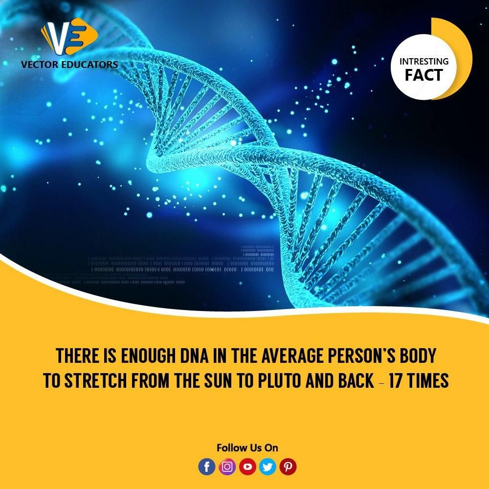 The human genome contains 23 DNA molecules, each containing from 500,000 to 2.5 million nucleotide pairs. DNA molecules of this size are 1.7 to 8.5 cm long when uncoiled — about 5 cm on average. There are about 37 trillion cells in the human body, so if you were to uncoil all of the DNA encased in each cell and place the molecules end to end, it would sum to a total length of 2×1014 meters — enough for 17 Pluto round-trips. #DNA #Chromosomes #InterestingFacts #VectorEducators