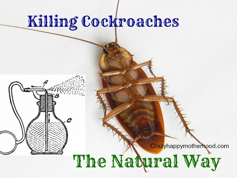 Using Essential Oils To Get Rid Of Roaches And Other Unwanted Insects In The House