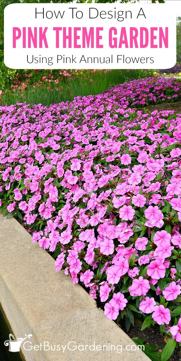 How to create a pink garden theme design using pink annual flowers designing a garden theme based on color is a fun way for beginners to experiment heres how to create a pink flower theme garden using pink annual flowers mightylinksfo