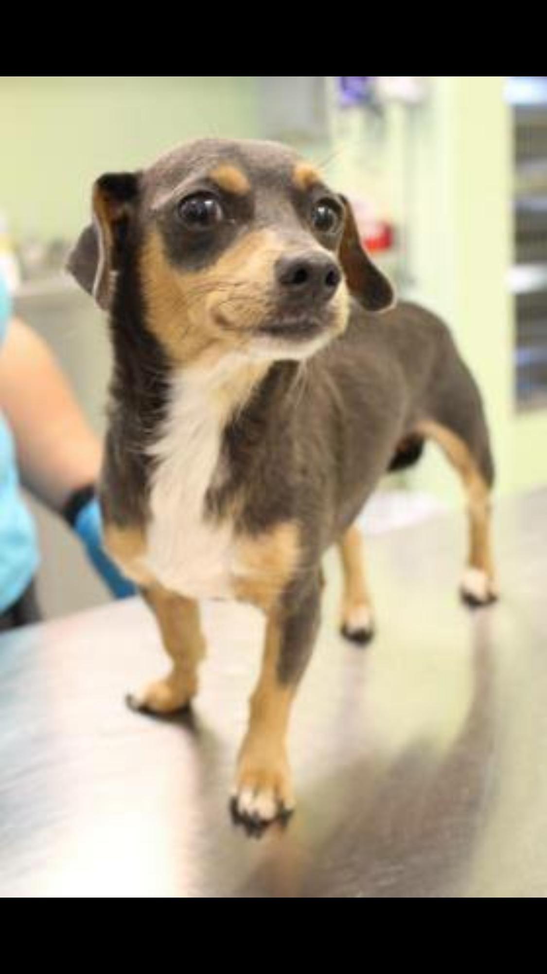 Pet Adoption Tulsa