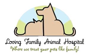 Veterinarian In Aurora Animal Hospital Creature Comforts Pets
