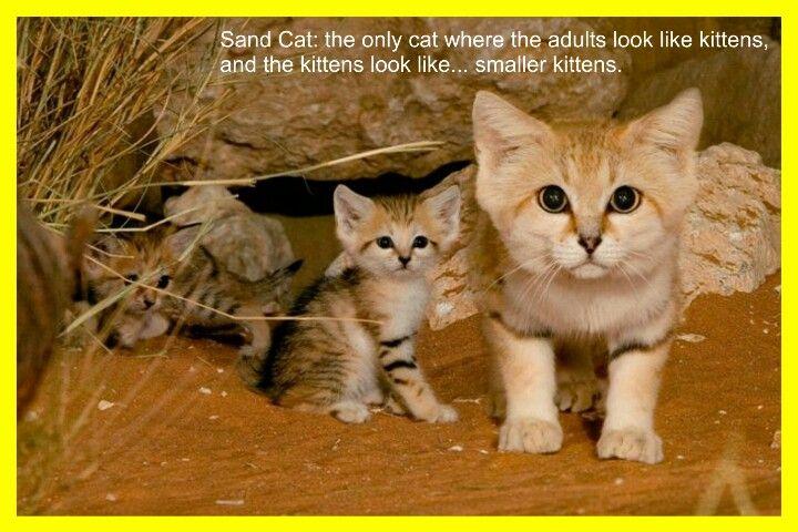 Cute cat's