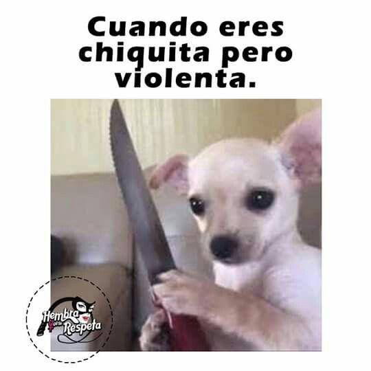 Pin By Taty Delgado On Frases De Hoy En Dia Animal Memes Funny Animal Memes Funny Dog Memes