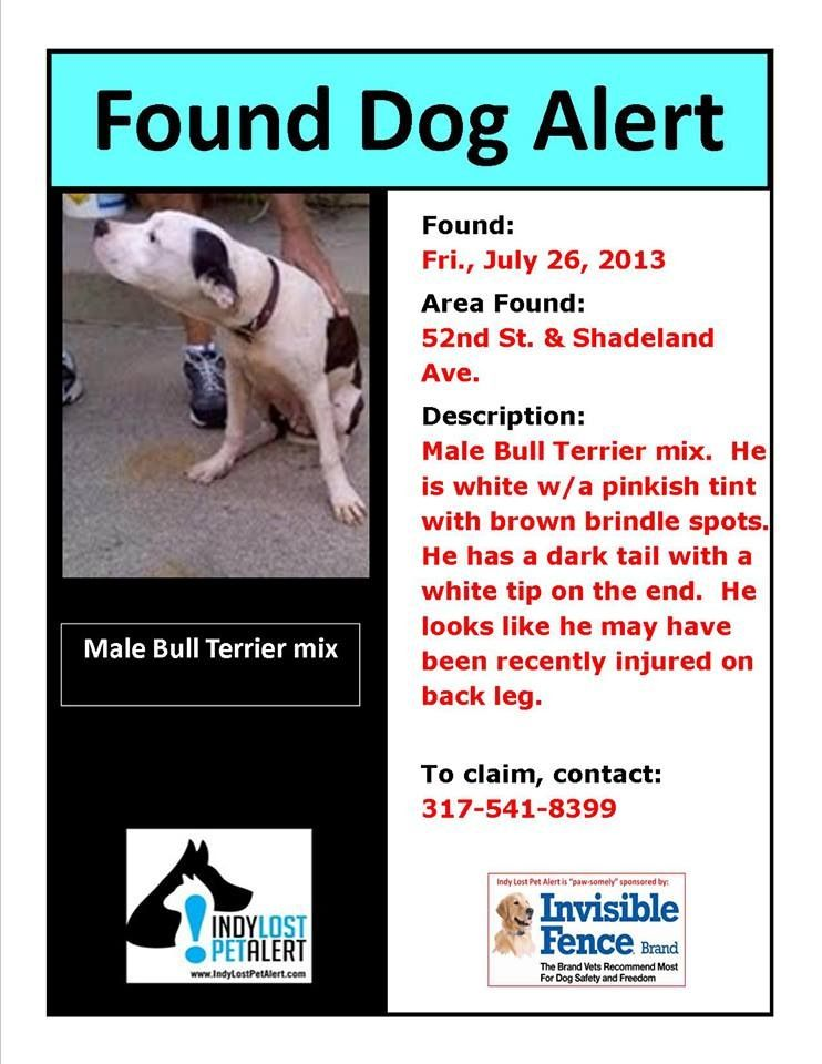Indianapolis In Found 7 26 13 52nd And Shadeland Male Bull Terrier Https Www Facebook Com Indylostpetalert Posts 46555 Losing A Dog Find Pets Bull Terrier