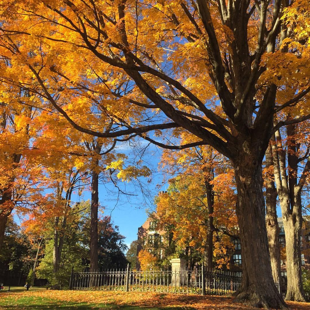 Mount Holyoke in the fall. #fall #mountholyoke #mountholyokecollege #marylyon