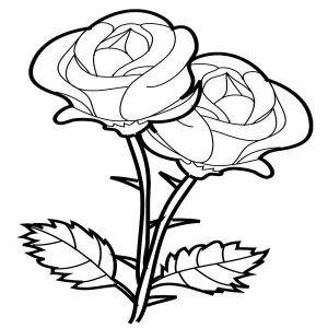 Imagenes De Rosas Para Dibujar Con Imagenes Dibujos De Rosas