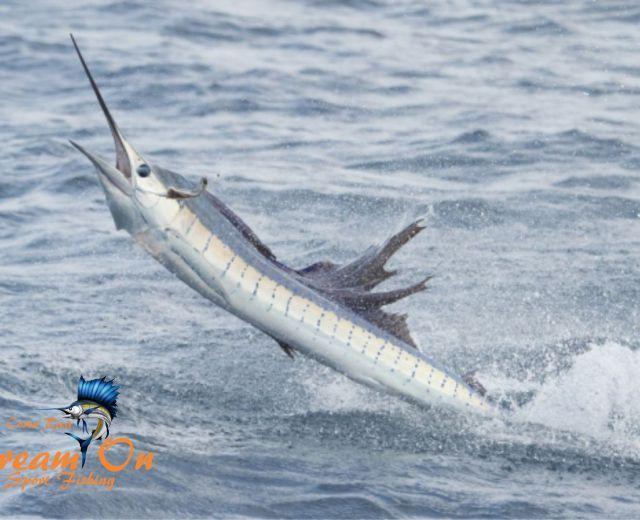Photoshttp://www.dreamonsportfishing.com/