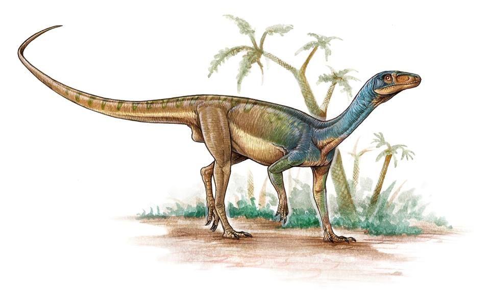 Pisanosaurus Mertii By Gabriel Lio Animales Prehistoricos Dinosaurios Prehistorico Los ornitisquios fueron unos dinosaurios que vivieron entre 228 y 65 millones de años aproximadamente, entre el triásico superior y el cretácico superior. pisanosaurus mertii by gabriel lio