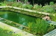 natural swimming pools: uses plants to filter the water instead of chemicals