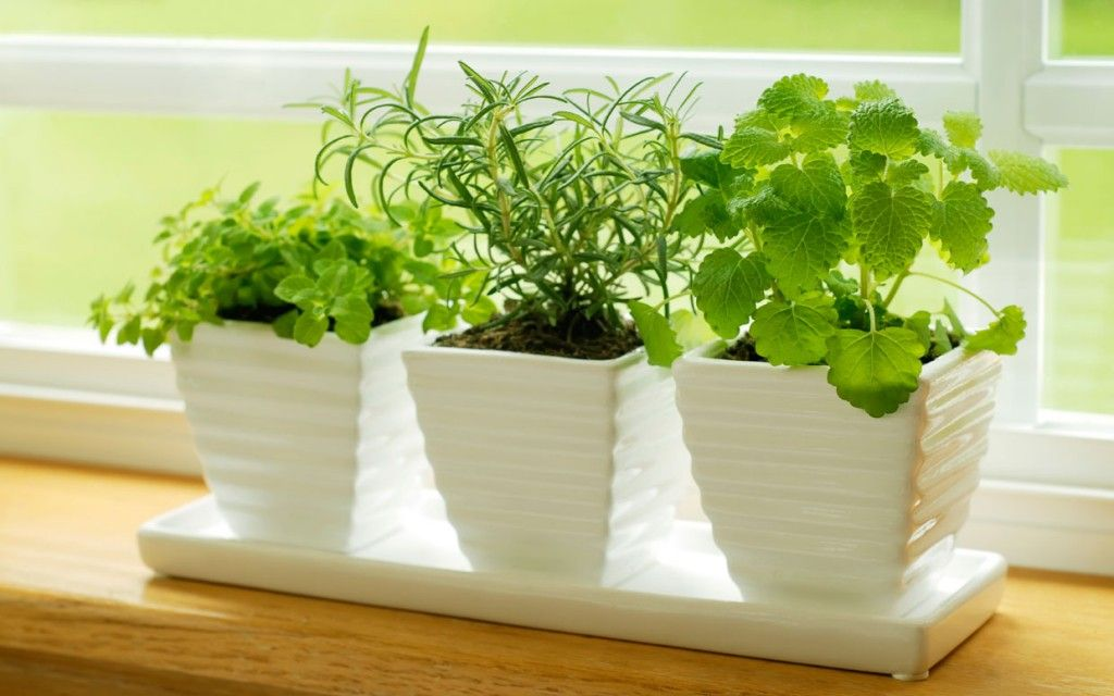 7 Tips for Growing an Herb Garden in Your Kitchen