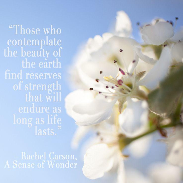 Beautiful flowering tree with quote by Rachel Carson. #wonder #photography #flower #fleur #Rebekah West