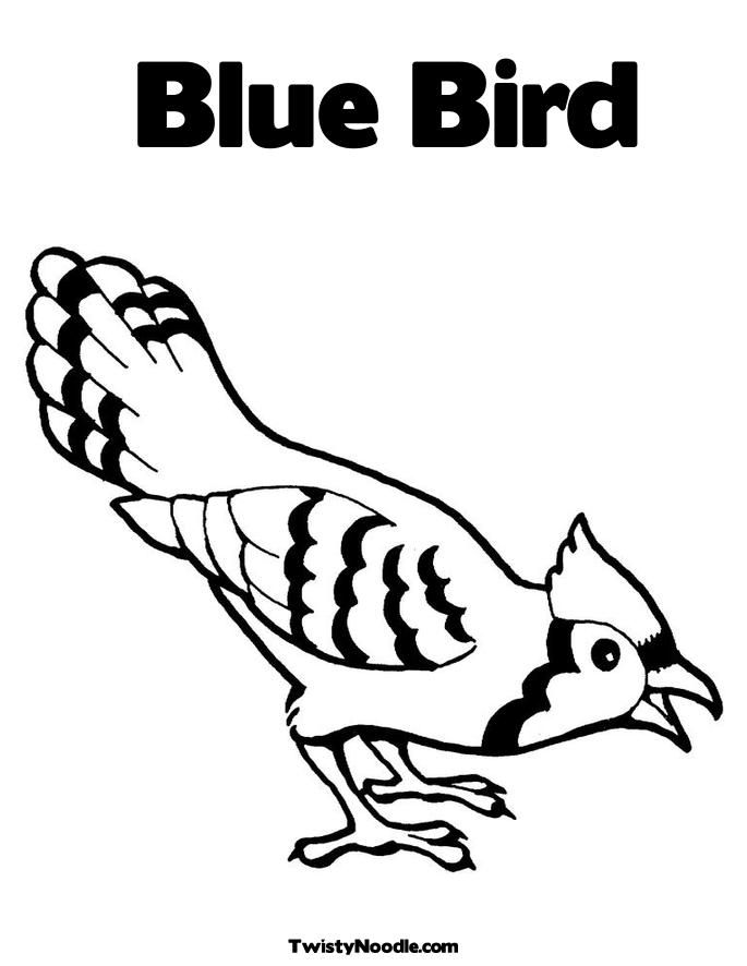 printable pictures of birds  bluebird coloring page