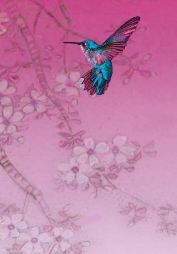 Sarah warren greeting card hummingbird sarah warren art cards sarah warren greeting card hummingbird m4hsunfo