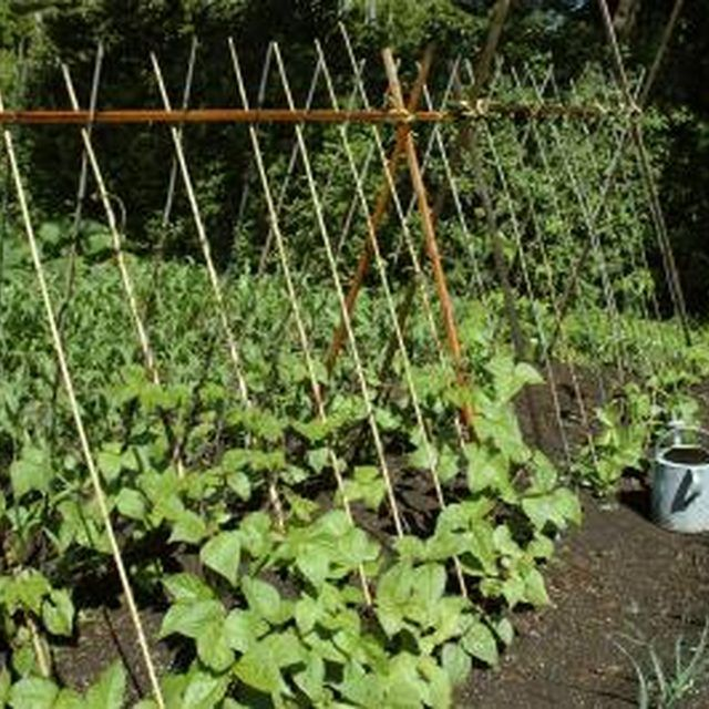 Growing Zucchini On A Trellis: A List Of Vertical Garden Vegetables (With Images