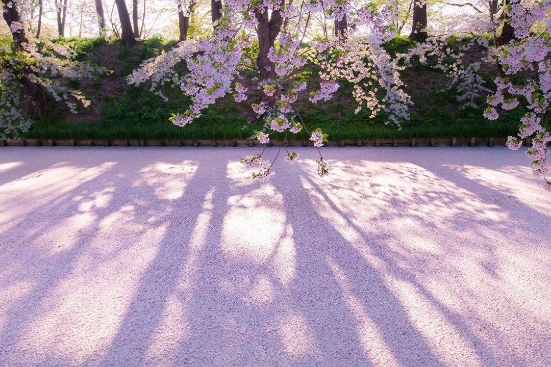 東京カメラ部 Editor's Choice:Akifumi Homma