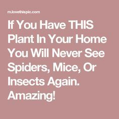 If You Have THIS Plant In Your Home You Will Never See Spiders, Mice, Or Insects Again. Amazing!