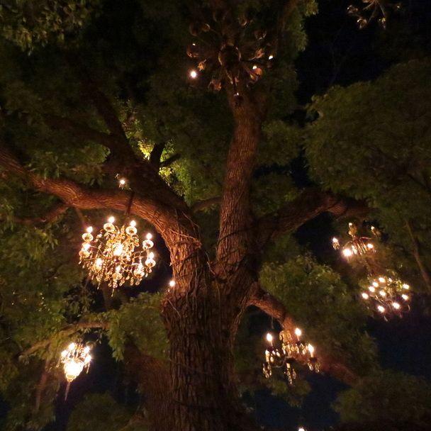 Chandelier Tree | California Dreamin | Pinterest | Chandeliers