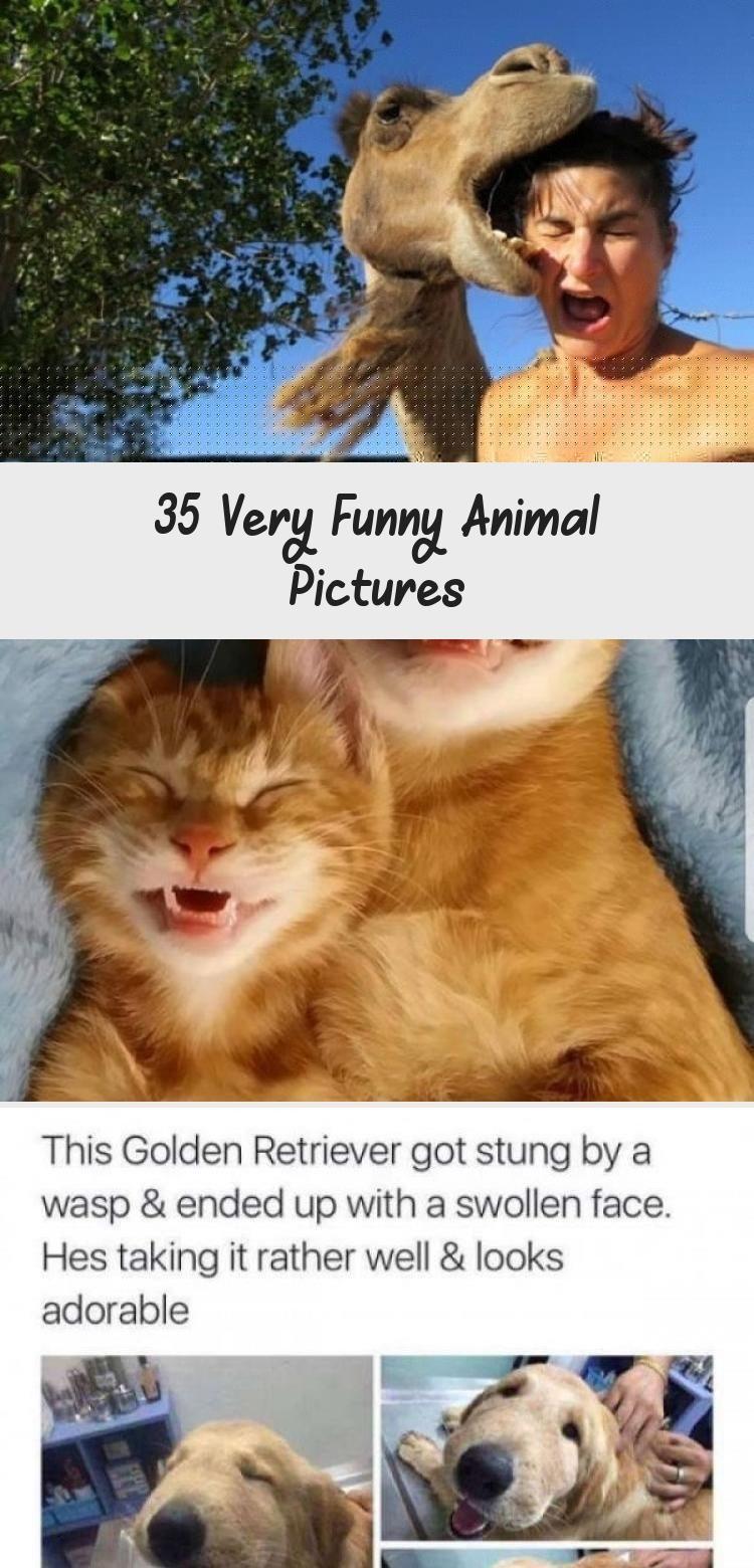 35 Very Funny Animal Pictures   #funnyanimals #funnycats #funnydogs #funnyanimalpics #animalmemes #AnimalsDibujos #AnimalsParaDibujar #AnimalsManualidades #AnimalsDelBosque #AnimalsAndPets