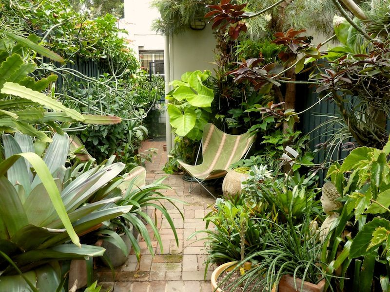 Peter nixon 39 s sydney subtropical courtyard garden for Jungle garden design ideas