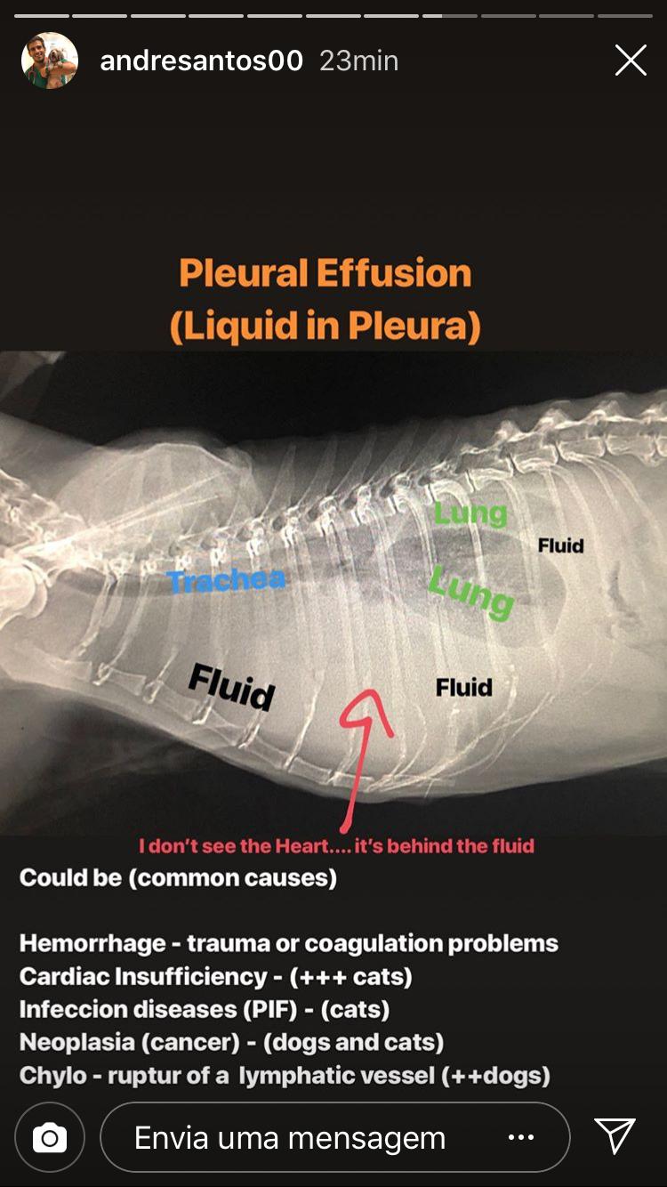 Pin By Natacha Deborde On Veterinary Veterinary Radiology Vet Medicine Vet Tech Student