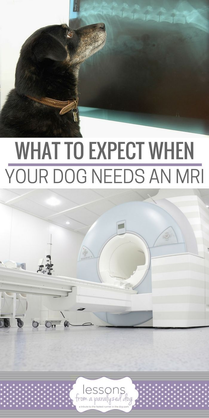 What To Expect When Your Dog Needs An MRI Dog training