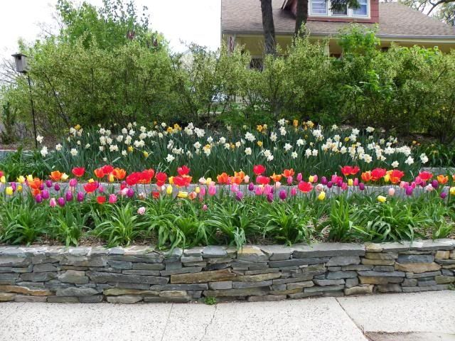 Lilies Landscaping Google Search Tulips Garden Daylily Beds Ideas