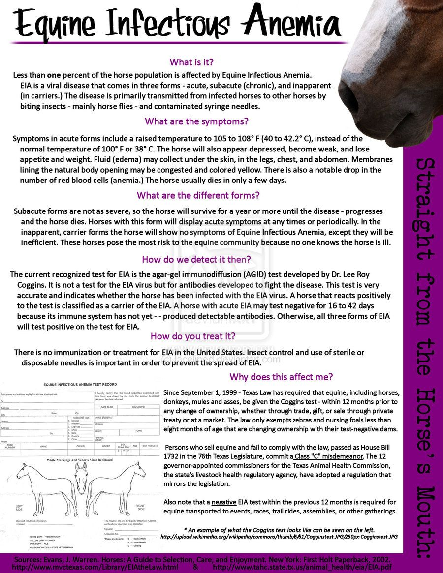 Equine Infectious Anemia Flier By Lacelinediantart On