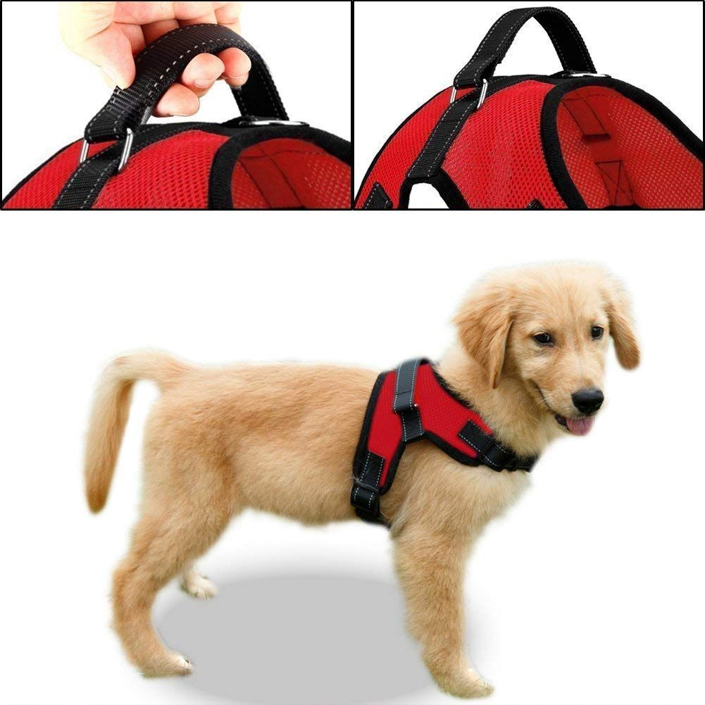 Amazonsmile Copatchy No Pull Reflective Dog Harness Small Red