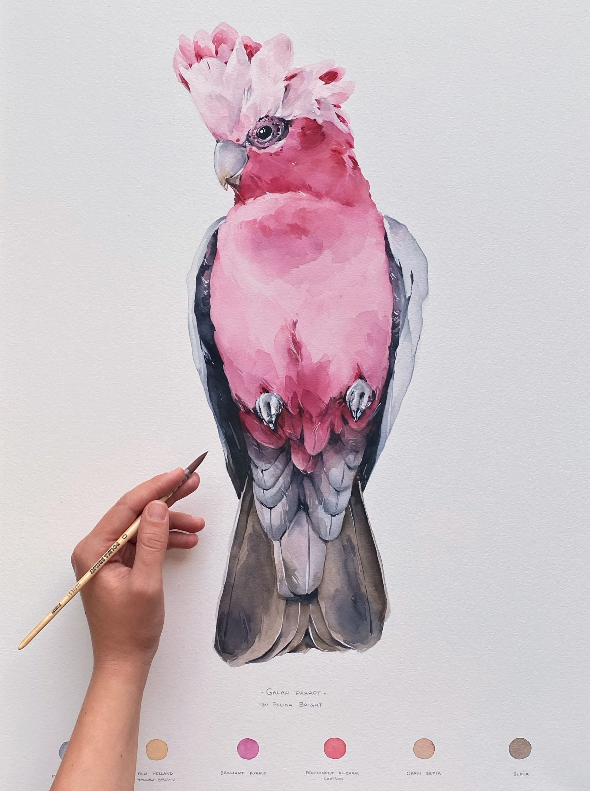 Galah Parrot In 2020 Watercolor Art Animal Paintings Artist Paint