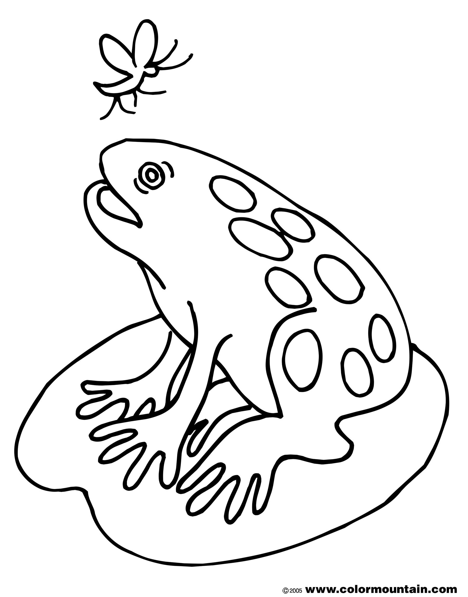 Lily Pad Coloring Page Fat Frog Sheet