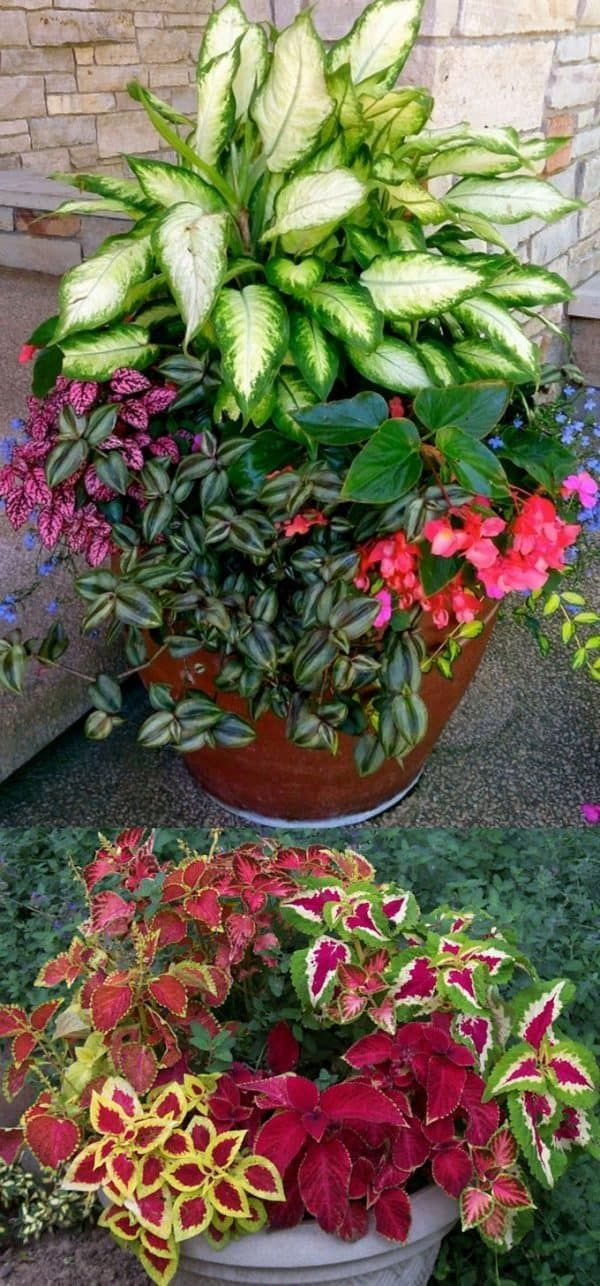 Photo of 16 Colorful Shade Garden Pots & Plant Lists