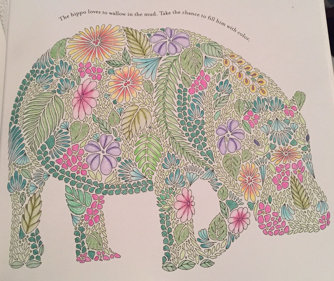Millie Marotta Hippo I Worked Forever On This Guy And You Can Hardly Pencil ArtColoring BooksAdult ColoringAnimal KingdomBig PeopleElephantColored