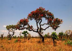 O Cerrado é o segundo maior bioma da América do Sul e ocupa uma área de 235.448 Km2, cerca de 20% do território nacional. A área contínua do Cerrado passa pelos estados de Goiás, Distrito Federal, Tocantins, Mato Grosso, Mato Grosso do Sul, Minas Gerais, Bahia, Maranhão, Piauí, Rondônia, Paraná e São Paulo, além dos encraves no Amapá, Roraima e Amazonas.