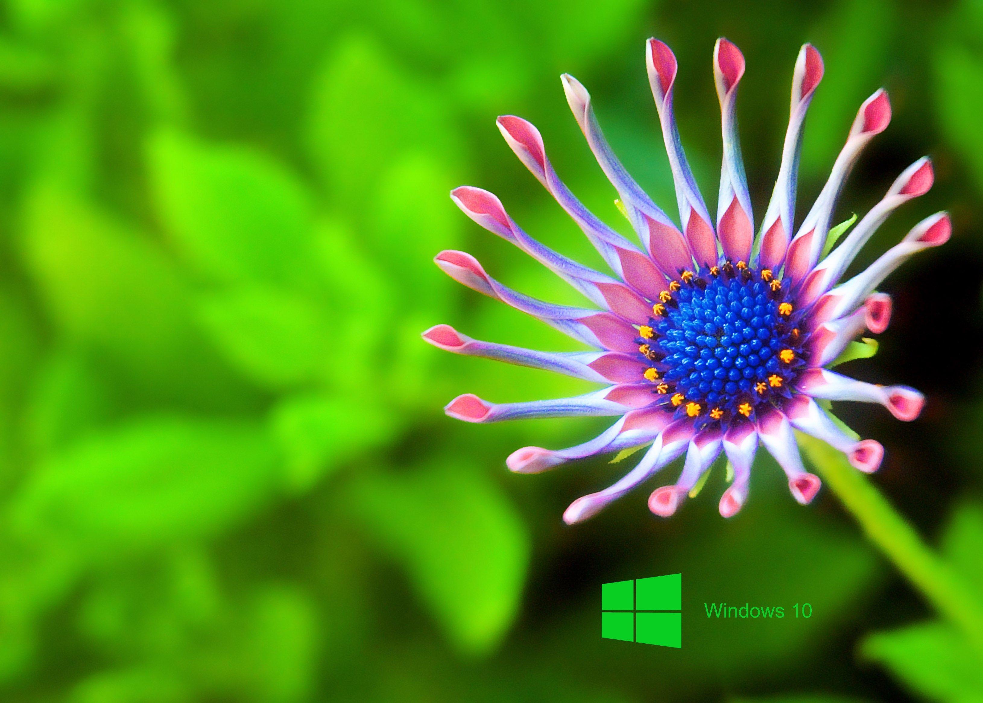 Hd Wallpaper Windows Flower Images Wallpapers Best Flower Wallpaper Macro Photography Nature