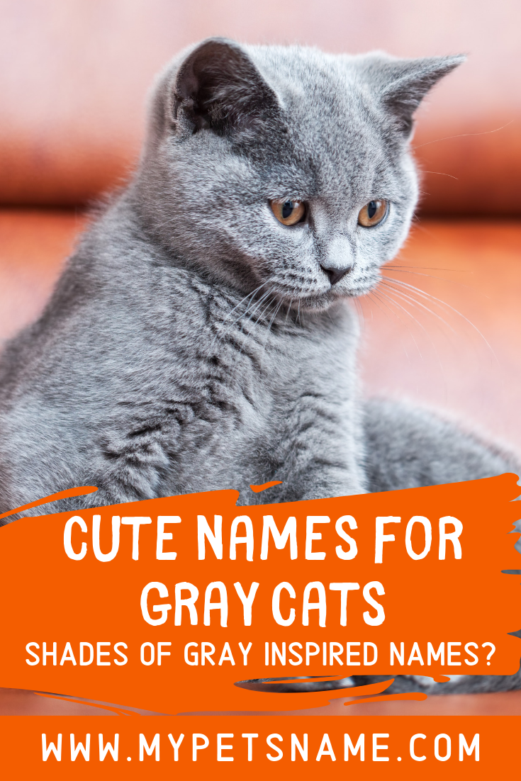 There Is Nothing Cuter Than Picking Out The Purrfect Gray Kitten To Become A New Member Of Your Family And If Y Cute Pet Names Kitten Names Boy Grey Cat Names