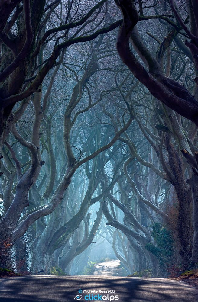 Dark Hedges by Michele Rossetti on 500px