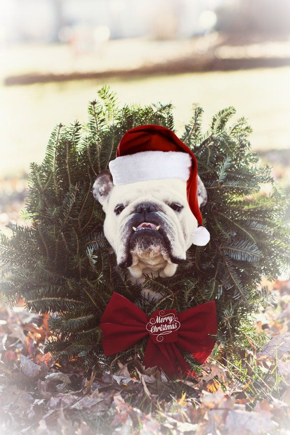 5+x+7+English+Bulldog+Christmas+Card+by+snowy4052002+on+Etsy,+$6.00 ...