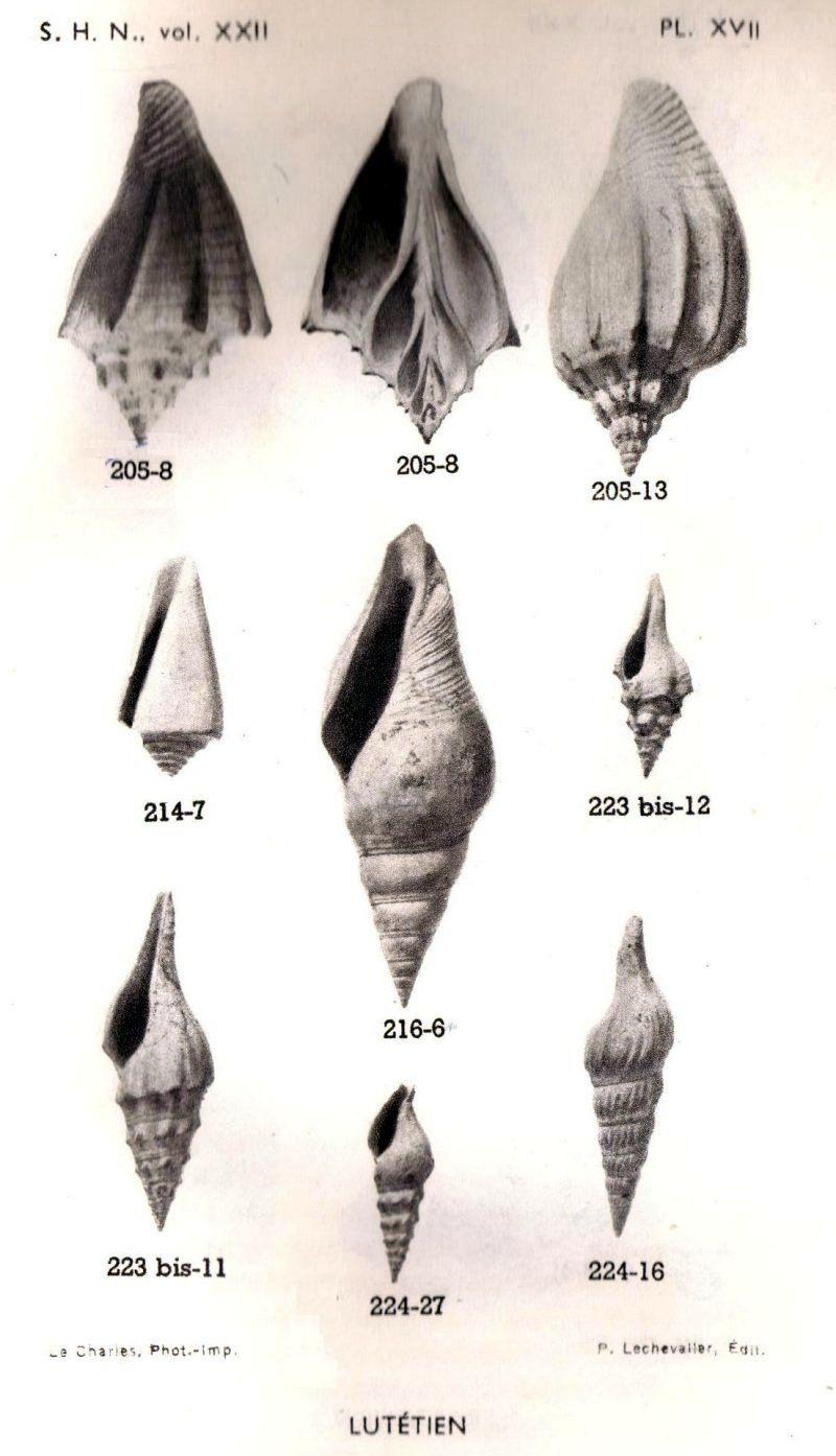 Planche 17 lutetien .jpg (800×1394)