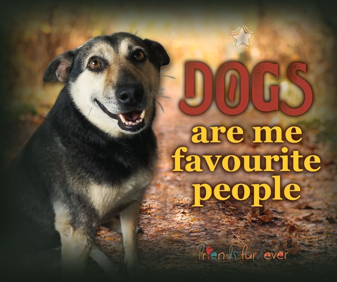 Dogs Are Absolutely My Favorite People Friendsfurever Dogs Doglovers Dogsofinsta Adoptdontshop Animalabuse Anima Dog Lovers Animal Rescue Animal Abuse