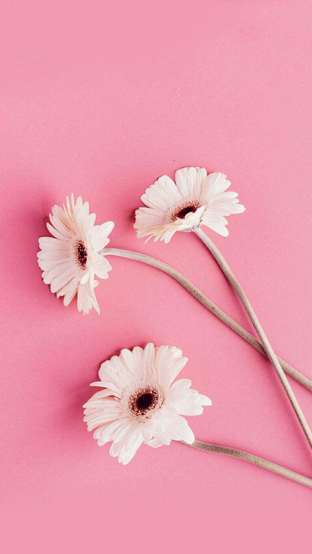 Pin On Bunga Peony