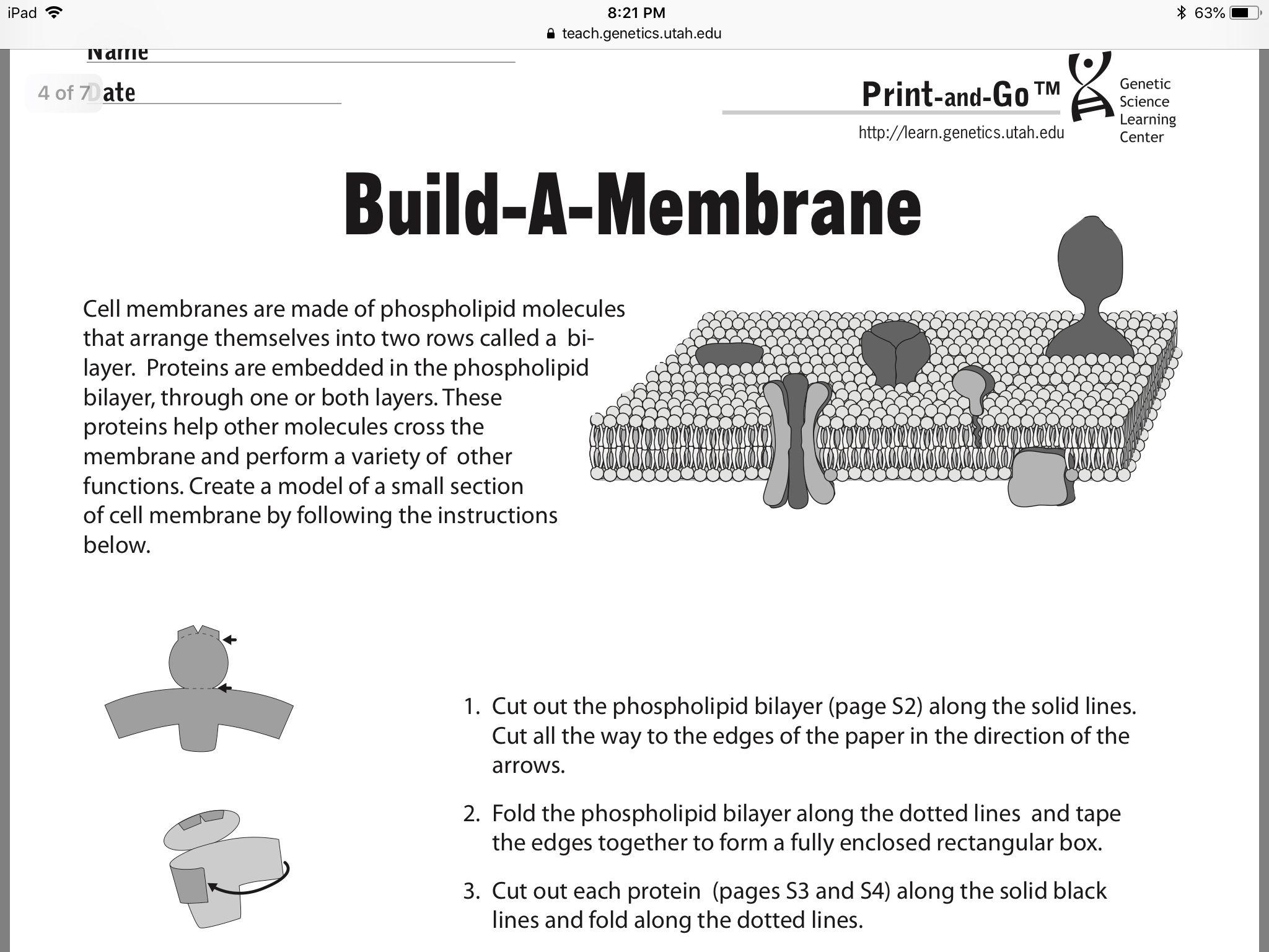 Pin By Deborah Stevens On Biology Cell Membrane Learning Centers Molecules [ 1536 x 2048 Pixel ]
