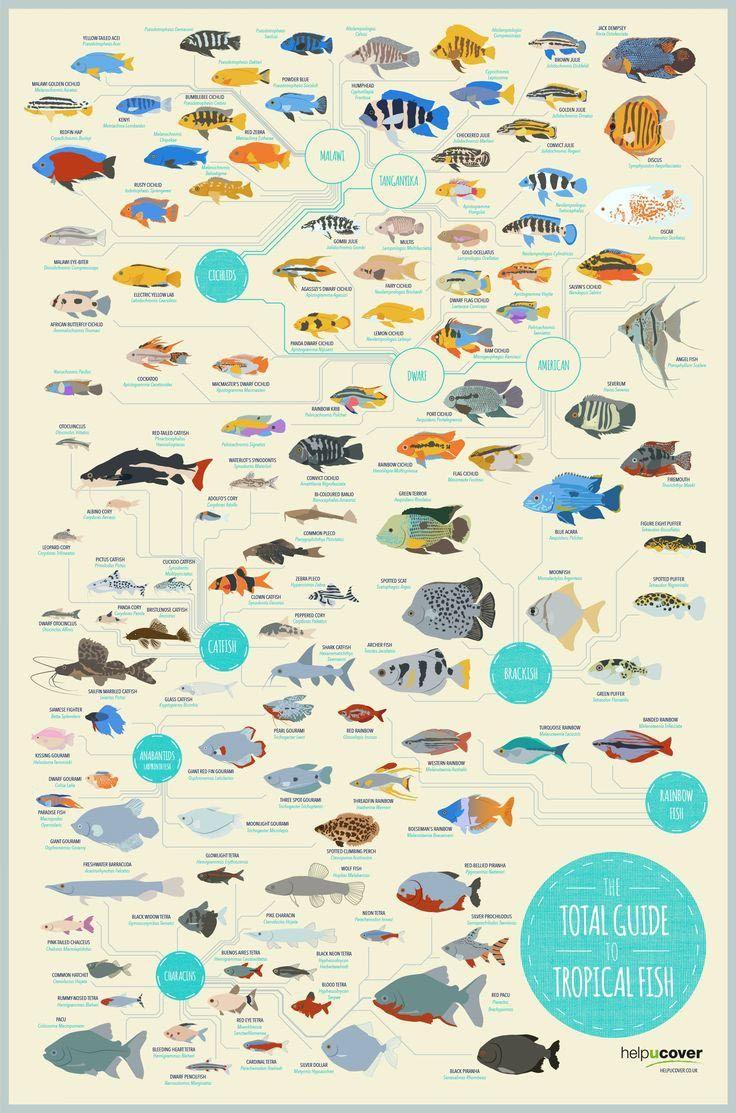 R Aquarium Fish Compatibility Chart