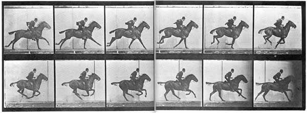 Eadweard Muybridge, Animal Locomotion, Plate 624