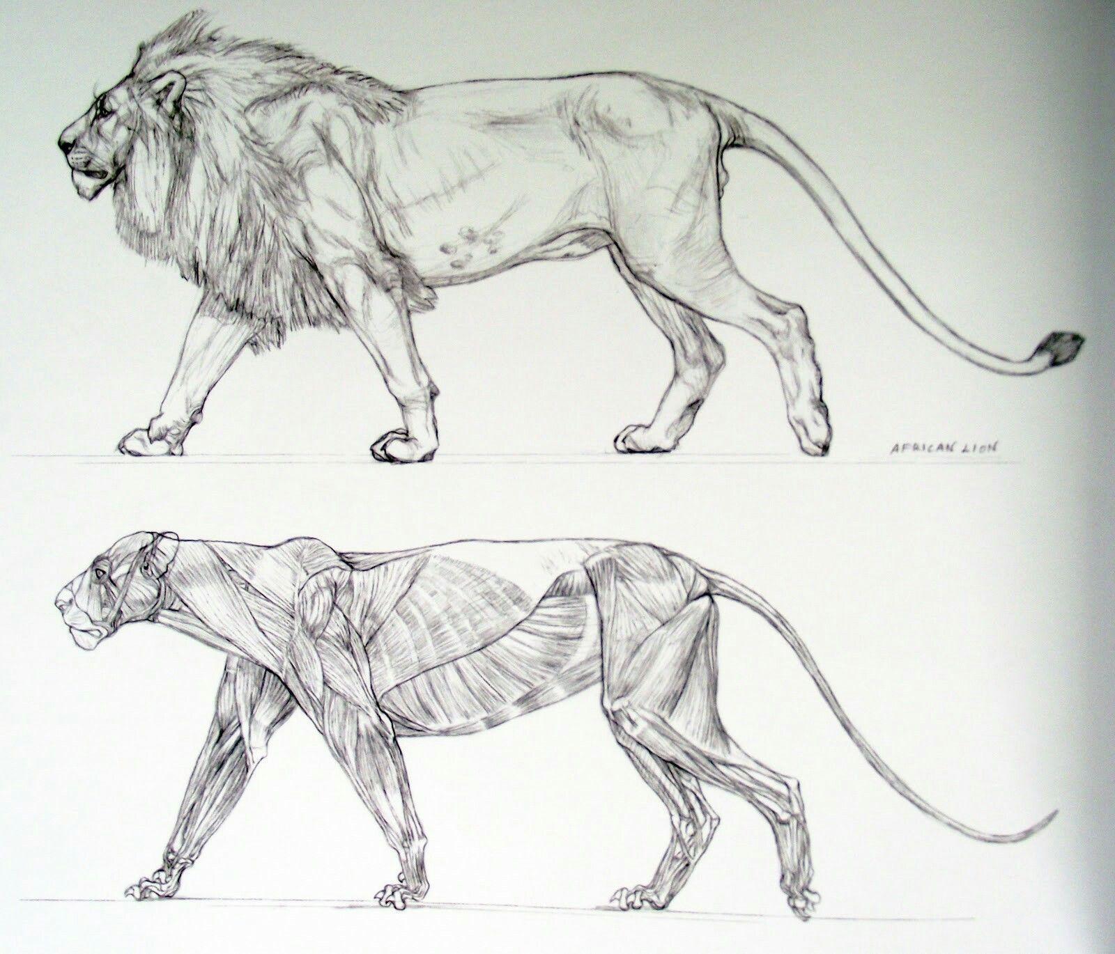 Pin By Mitchell Van Der Hulst On Tiger Pinterest Tigers