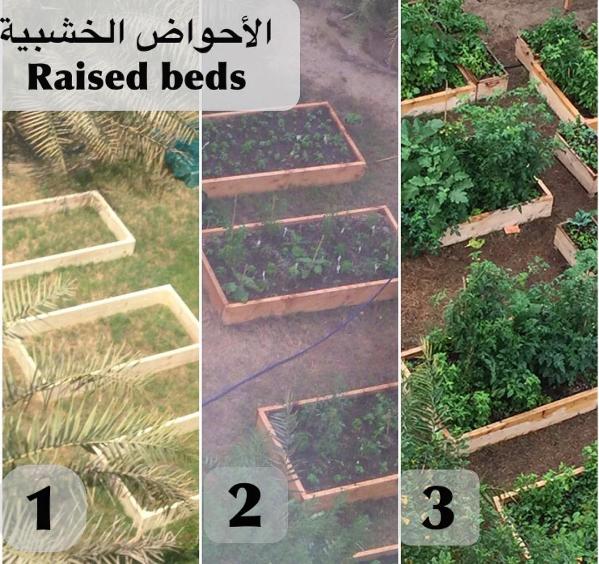 الزراعة في احواض الريزد بد Agriculture Raised Beds