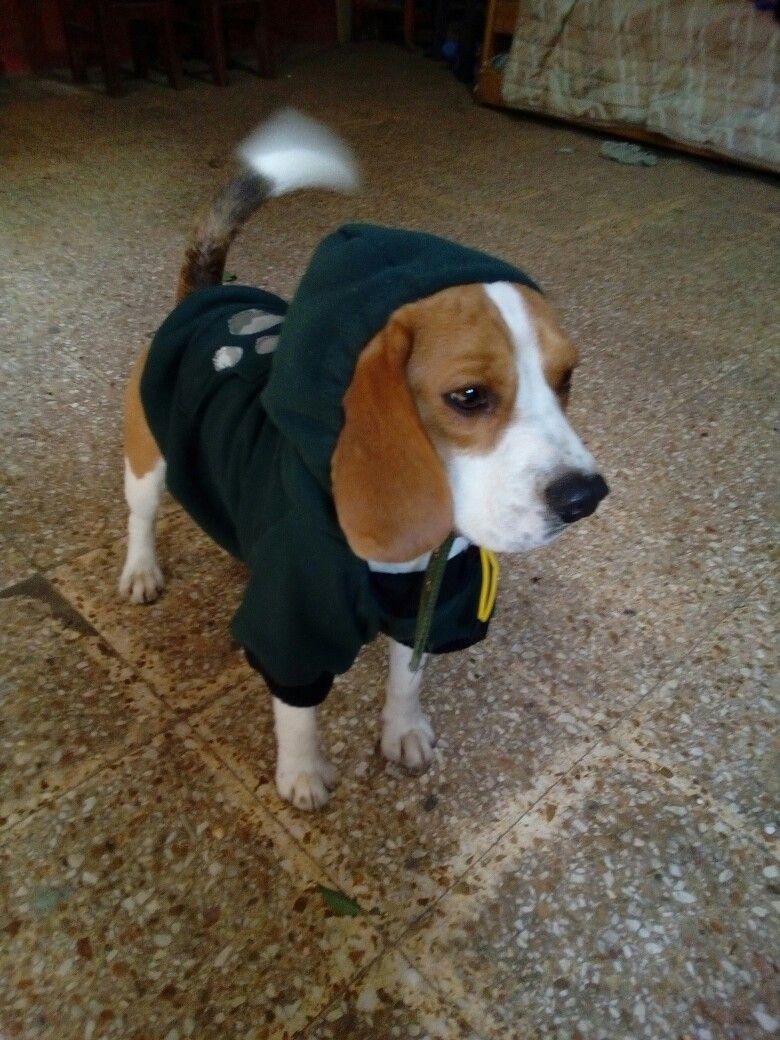Fantástico Perro Libre De Patrones De Tejer Puente Uk Colección ...