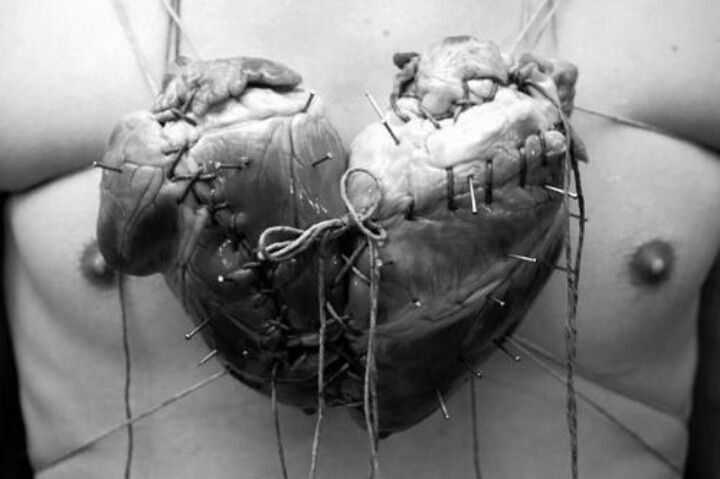 The Heart Shape Was Made For Two Organ Hearts Connected Together